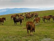 Travel photography:Horses in the Alto Pirineo National Park, Spain