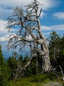 Travel photography:Dead tree in the Alto Pirineo National Park, Spain