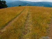 Travel photography:Tire tracks in the Alto Pirineo National Park, Spain