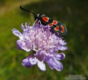 Travel photography:Small insect on flower in the Alto Pirineo National Park, Spain