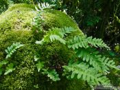 Travel photography:Ferns in the Alto Pirineo National Park, Spain