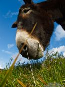 Travel photography:Donkey at the La Renclusa refuge at the base of the Aneto mountain, Spain