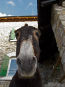 Travel photography:Donkey at La Renclusa refuge at the base of the Aneto mountain, Spain