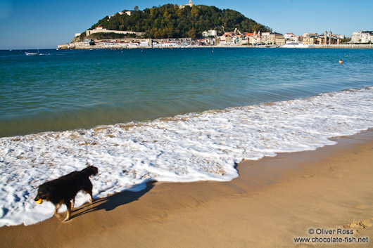 A dog takes a walk on la Concha beach in San Sebastian