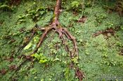 Travel photography:Tree root in San Sebastian, Spain