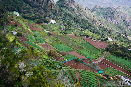 Terraces in Anaga Rural Park on Tenerife