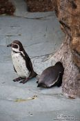 Travel photography:Penguins in the Valencia Aquarium, Spain