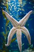 Travel photography:Sea star in the Valencia Aquarium, Spain