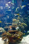Travel photography:Small reef with fishes in the Valencia Aquarium, Spain