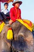 Travel photography:Tourists riding on an elephant through Ayutthaya, Thailand