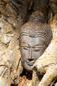 Travel photography:Tree roots growing over a Buddha head at the Sukhothai temple complex, Thailand