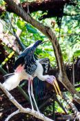 Travel photography:Giant stork at Chiang Mai Zoo, Thailand