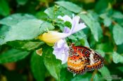 Travel photography:Mae Rim Orchid Farm, Thailand