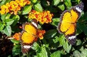 Travel photography:Butterflies at the Mae Rim Orchid Farm, Thailand