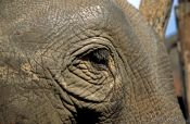 Travel photography:Elephant at Ruam Mit elephant camp, Thailand
