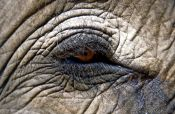 Travel photography:Elephant eye, Thailand