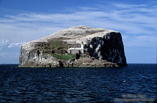 Bass Rock with large Gannet colony and light house