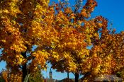 Travel photography:Glasgow trees in autumn colour, United Kingdom