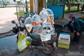Travel photography:Goldfish on wheels in Hue, Vietnam