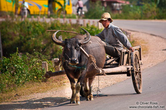 Sapa man on cart