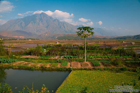 Rice fields near Sapa with Fansipan mountain in the background