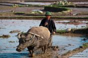 Travel photography:Sapa working the rice fields , Vietnam