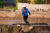 Travel photography:Working the rice fields near Sapa, Vietnam