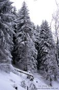 Travel photography:Snow covered pine forest, Germany